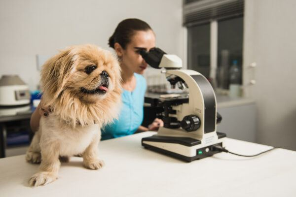 Female vet with dog and microscope. Female researcher with a microscope. Laboratory in the Veterinary Clinic. Focus on the dog.